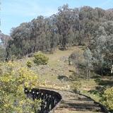 High Country Rail Trail Horse Ride Inc