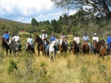 Illawarra Horse Trail Riders Inc