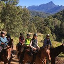 Tweed-Byron Trail Horse Riders Club Inc