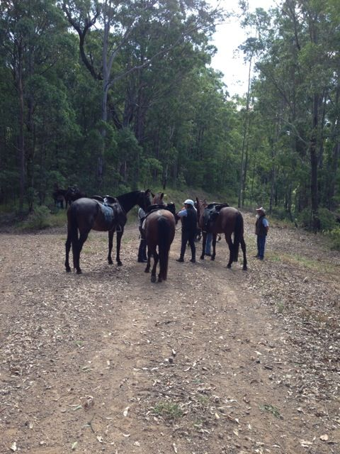 Central Coast Trail Horse Riders Club