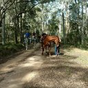 Shelley Forest Ride Sat 7 Dec 2019