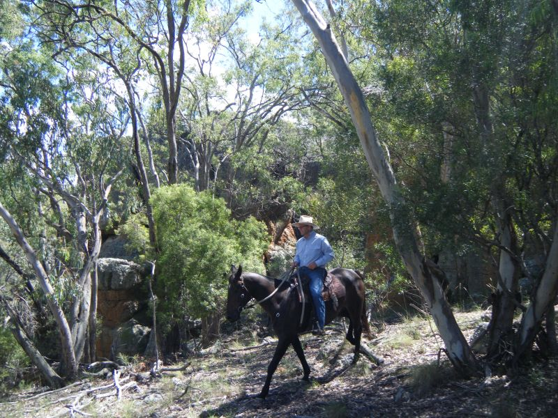 "Mark and ""Jimmy"" riding among the bush and rocks at Long Mountain, Curlewis March 2012"