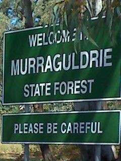 Welcome to Murraguldrie State Fores