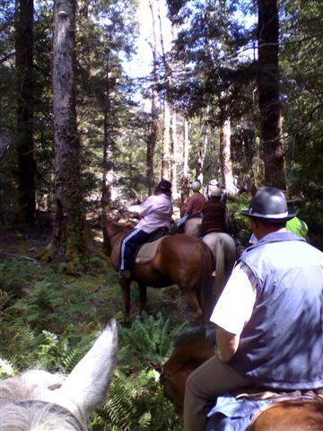 Happy Trails - Lees Paddock