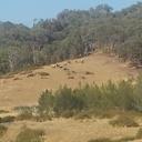 strath 2013 hill