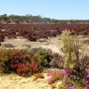 mallee scenery.