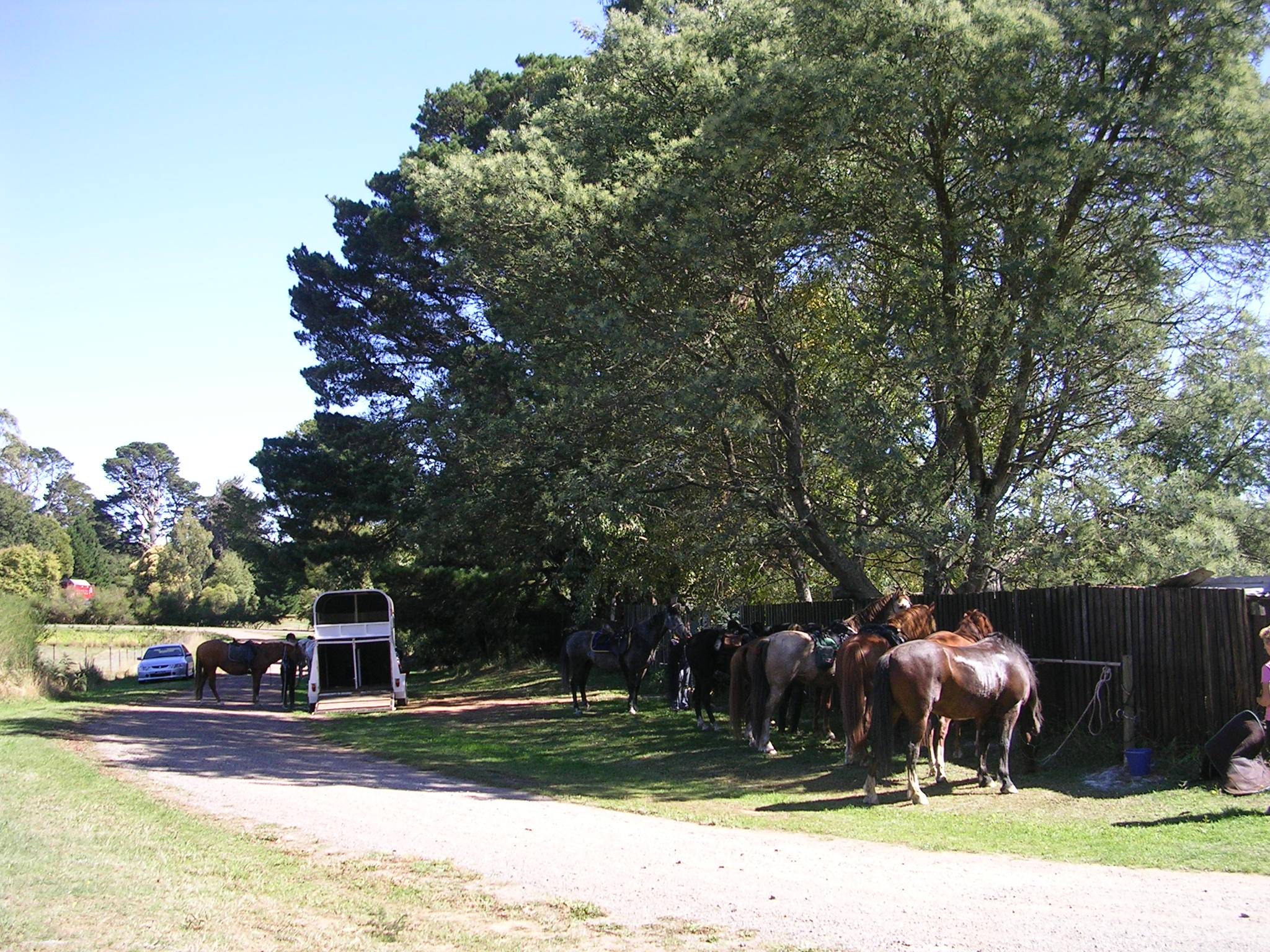 the food was good...they even supplied green grass for the horses! Combined ride with Kyneton club.